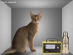 É um experimento mental criado pelo físico Erwin Schrödinger utilizado para discutir a superposição de estados na Mecânica Quântica. No experimento o gato que está dentro de uma caixa com veneno poderia estar vivo ou morto apenas após a verificação do seu estado. <br /><br />  Palavras-chave: Mecânica quântica, paradoxo, superposição de estados.