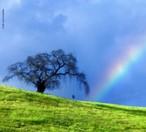 As cores do arco-íris podem ser vistas quando a luz do sol é dispersada por milhões de gotas de água da chuva, elas agem como prismas e tornam visíveis as cores que compõem os anéis coloridos do arco-íris. <br /><br /> Palavras-chave: Óptica, luz, prisma, dispersão, espectro de cores, ondas, arco-íris.